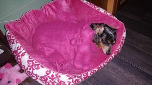 The #AdorableDistraction recouping in her princess bed.